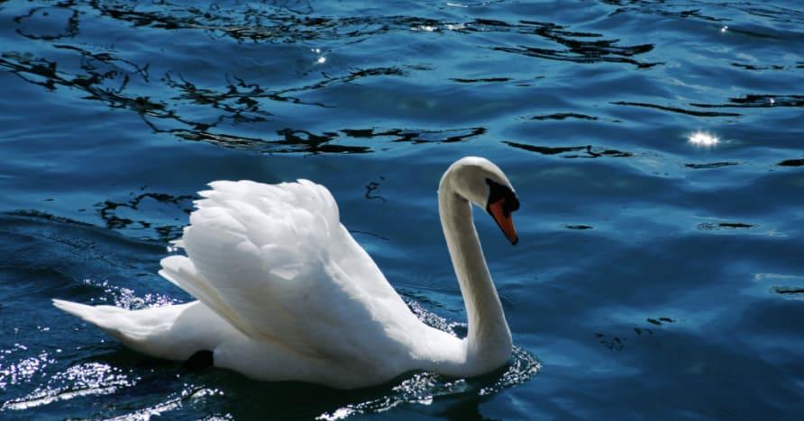 Royal Swan de Ainsworth Gaming: una revisión completa